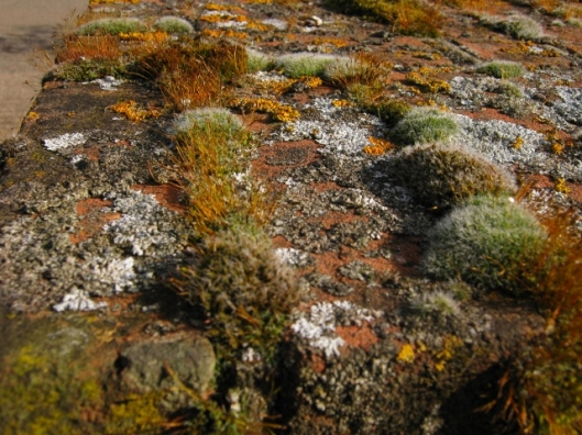 001Lichen & moss on top of gate post (640x480)