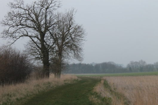 008Path by the fields (640x427)