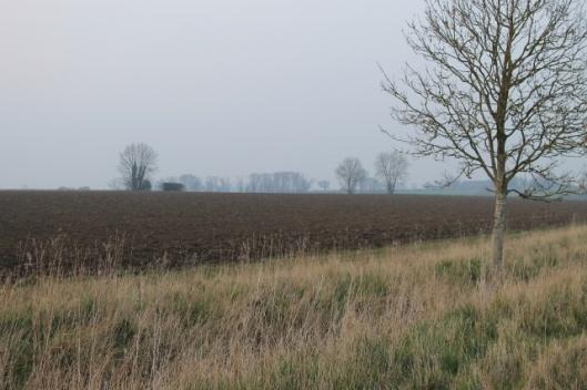 010Distant trees (640x427)