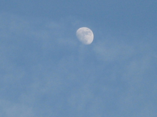 011Afternoon moon (640x480)