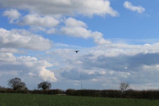 046Birdscarer kite (640x427)