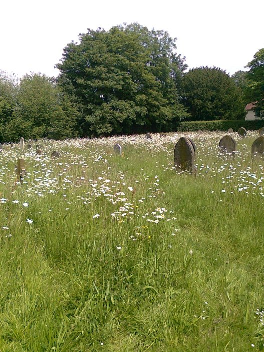 054Ox-eye Daisies in churchyard