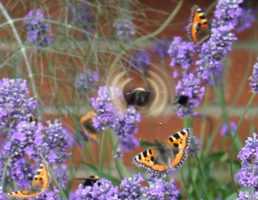 069Lavender with butterflies (cartoon)