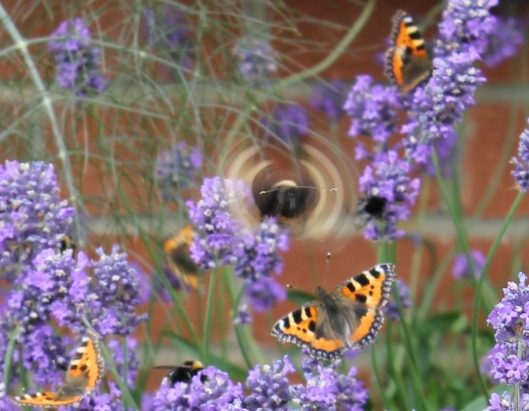 069Lavender with butterflies (cartoon)