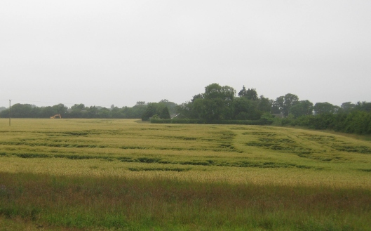 001Wheat field