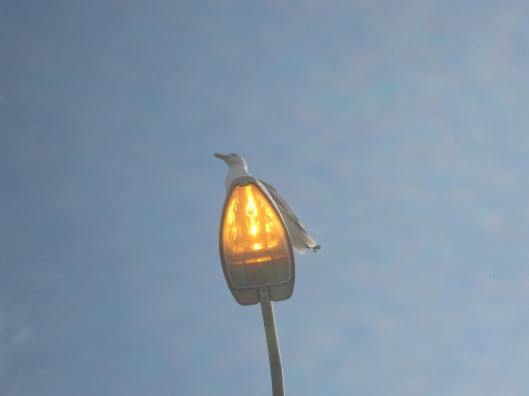 128Herring gull on lamp