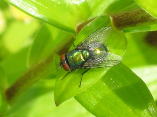 006Greenbottle