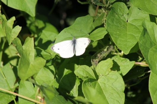 008MSmall White (640x427)