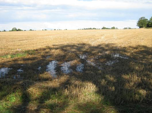 010Puddles in field