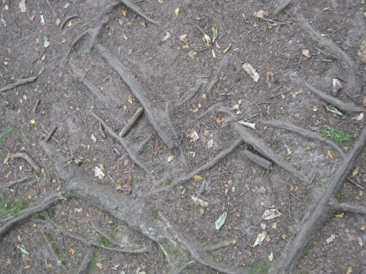 024Tree roots on path (640x480)