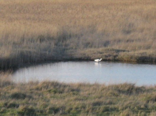 028Little egret in pool (640x480)