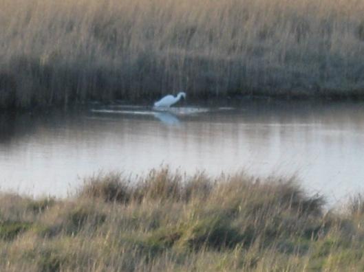 029Little egret in pool (640x480)