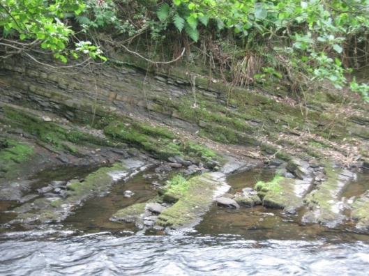 049Rock strata River Dane (640x480)