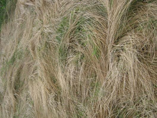 061Wind-blown grass shapes