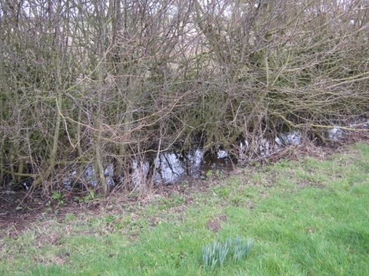 025Water under the hedge at St Margaret's common (640x480)
