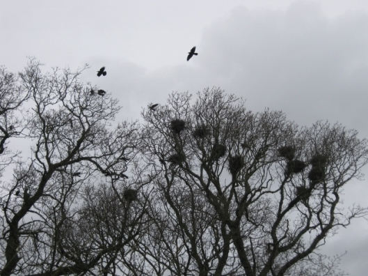 029St Margaret's rookery (640x480)