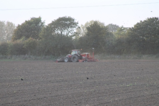 002Sowing (640x427)