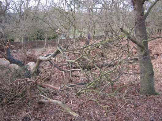 007Fallen trees at Minsmere (640x480)