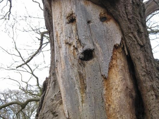 008Interesting bark, Minsmere (640x480)
