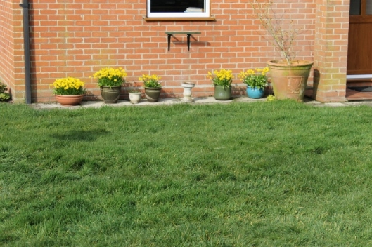 044Daffodils outside house (640x427)