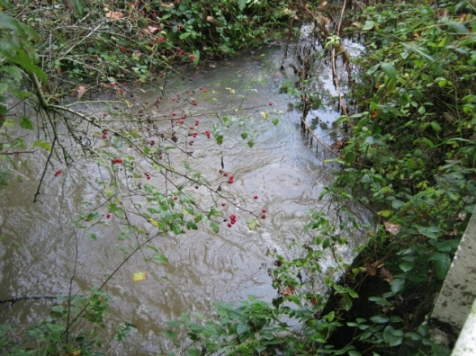 017Flowing water in ditch (640x480)