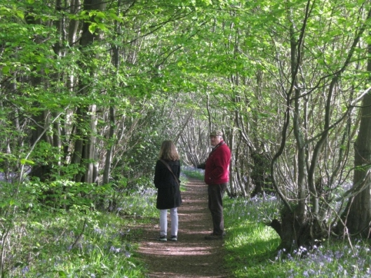 038R and E in bluebell wood (640x480)