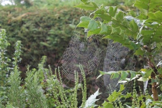 001Spiders' webs (640x427)