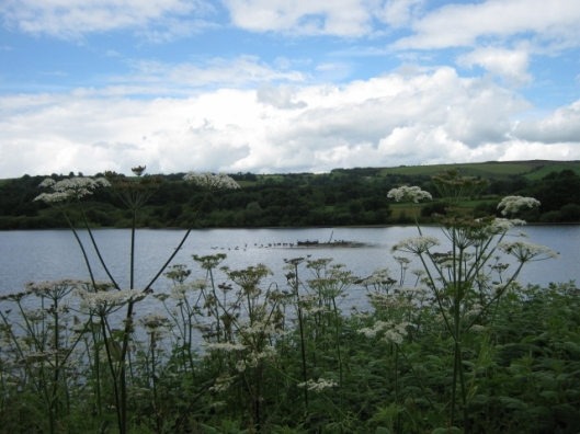 001Tittesworth reservoir (640x480)
