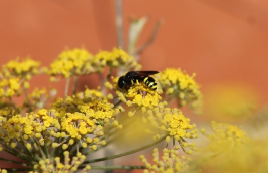 002Wasp on fennel (640x413)