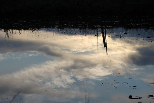IMG_1861Reflection in pond (640x427)