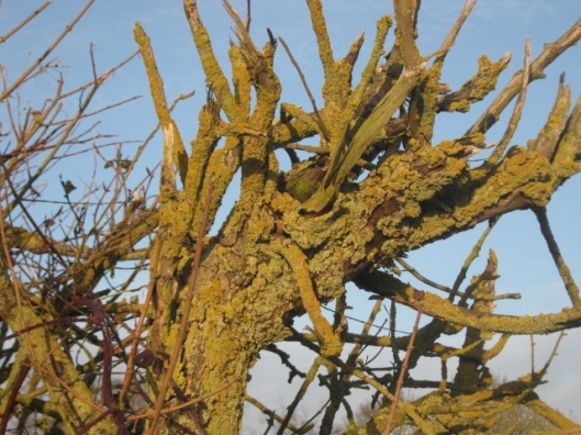 IMG_3996Lichen-covered dead tree (640x480)