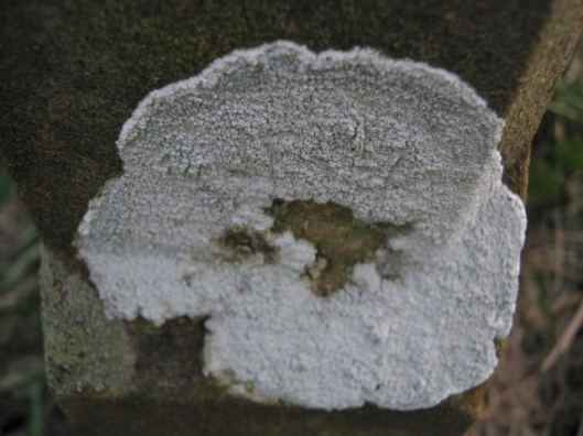 IMG_4010Lichen on gravestone (640x480)