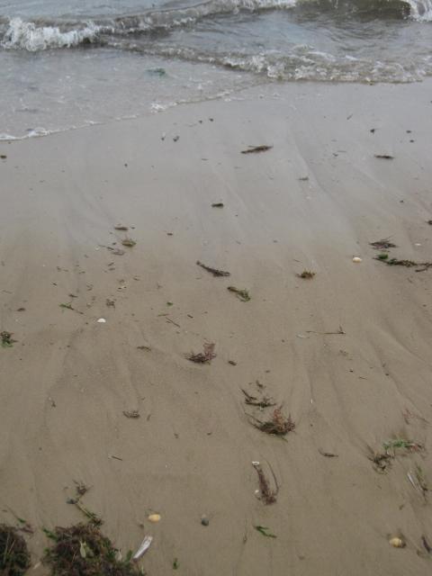 030Wet sand (480x640)
