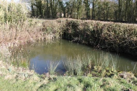 IMG_1889Corner pond (640x427)