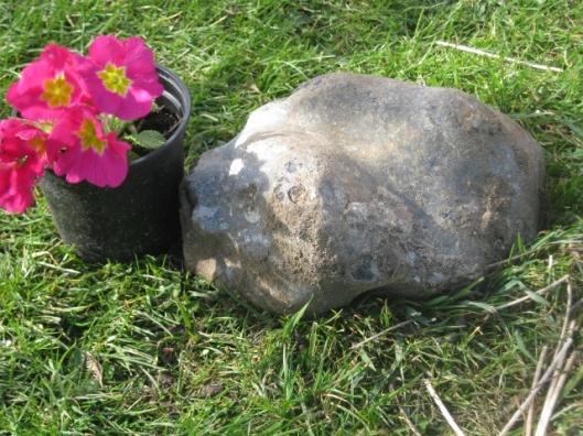 IMG_4321Flint boulder (640x480)