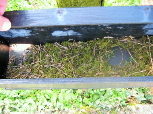 IMG_4348Parcel box with nest (640x480)