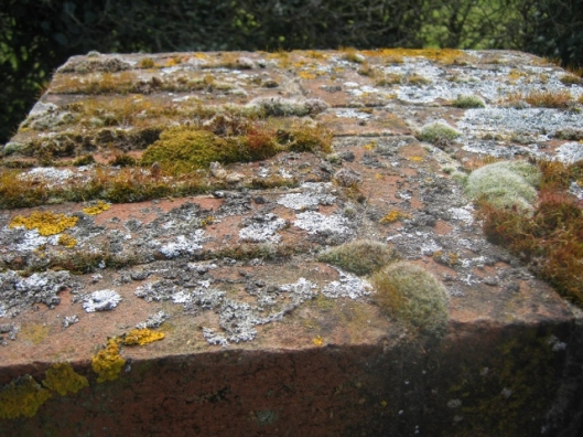 Lichen and moss-covered wall