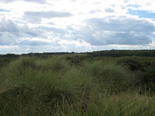 024Dunwich Heath (640x480)