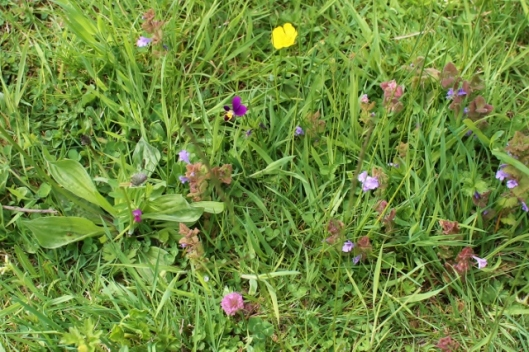 IMG_2244Wild flowers (2) (640x427)