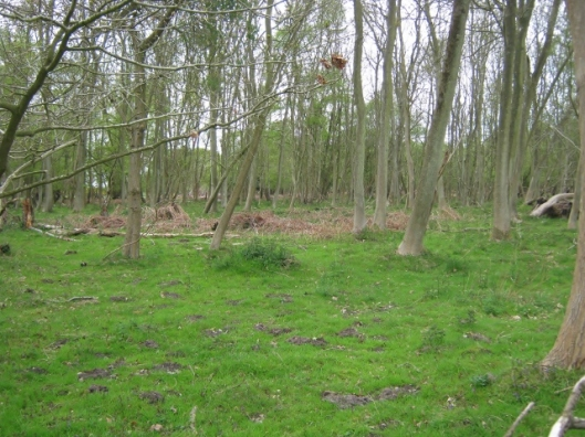 IMG_4577Captain's Wood (640x480)