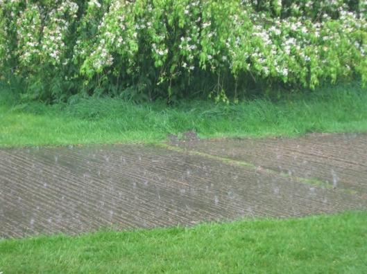 IMG_4632Heavy rain (640x480)