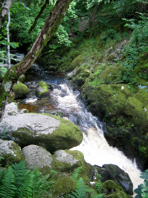 IMG_4942Aira Force (480x640)