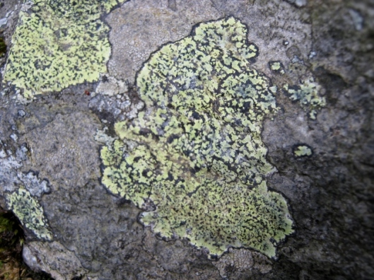IMG_5011Map Lichen perhaps (640x480)