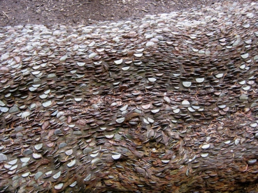 IMG_5022Coins in log (640x480)