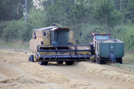 IMG_2392Barley harvest (640x427)