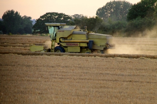 IMG_2394Barley harvest (640x427)