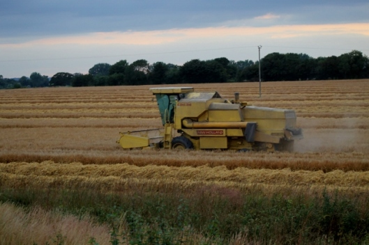 IMG_2395Barley harvest (640x427)