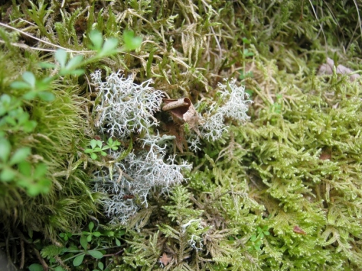 IMG_5162Lichen and moss