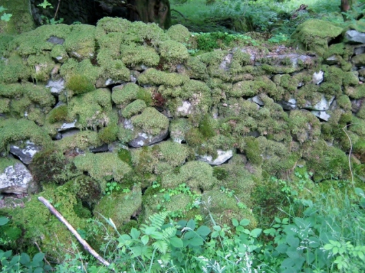 IMG_5193Mossy wall