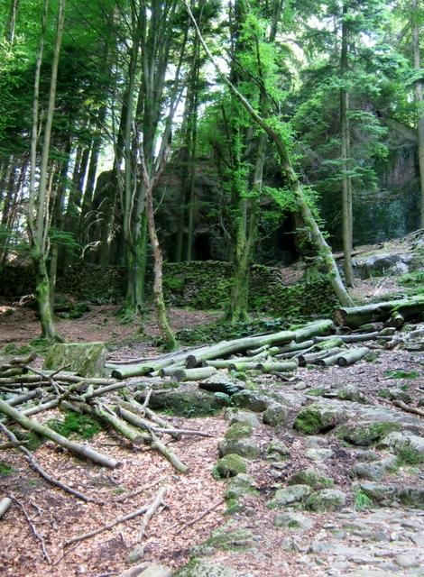 IMG_5212Dobgill wood